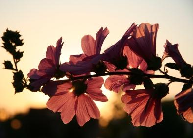 flower-sun-spring-385993